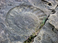 Fossils on the Isle of Skye.